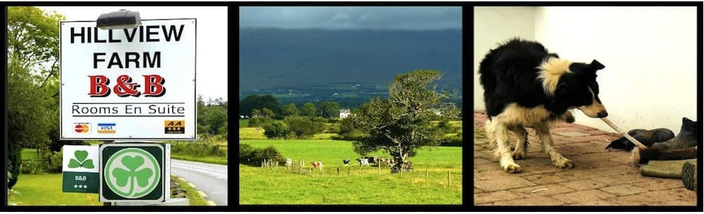 Hillview farm Killorglin Bed &Breakfast County kerry