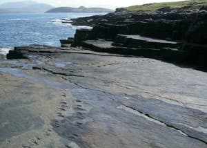 Valentia Island Tetrapod tracks in County Kerry Ireland